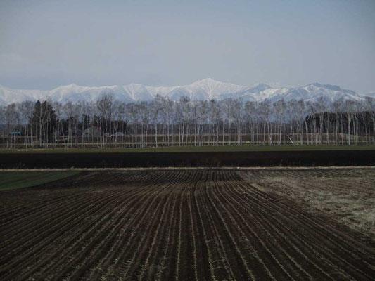 すでに畑は黒い土になっていて、耕して種付けをする準備に入っています