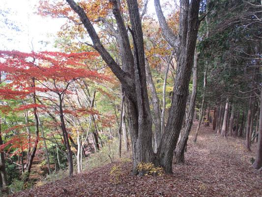 笹尾根の秋2