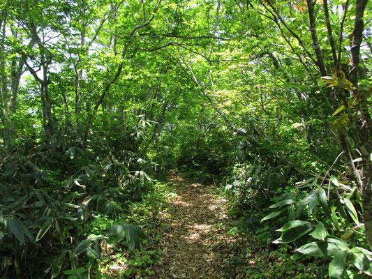 気持ちのいい森の中の道をどこまでも行きます