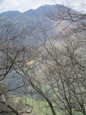向こうの山の裾野は緑 グラデーションで春まだきの山頂に色合いが変化しています
