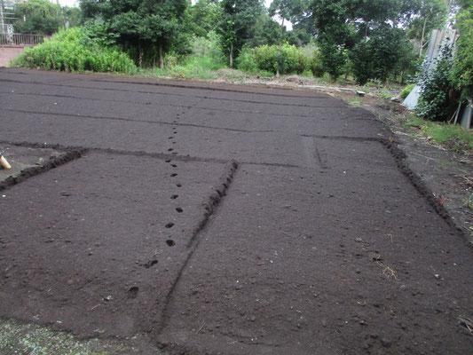 せっかく耕して整地したところに、猫の足跡・・・