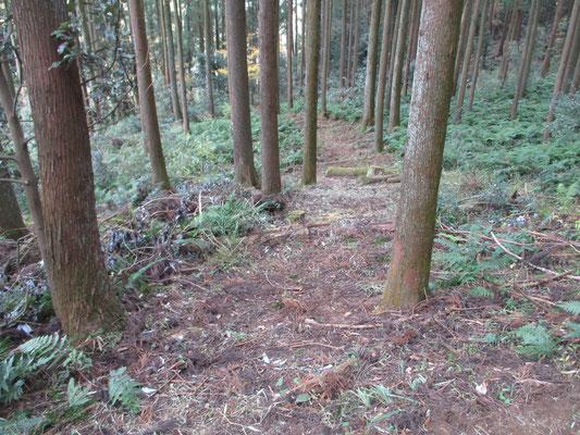 平山坂上に近づく一帯は、先日よりたびたび事務局がヤブの整備をした 特にこの先の高圧鉄塔の箇所はススキなどのヤブが深かったので、かなり歩きやすくなっている