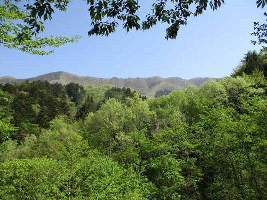 浅川から見上げた稜線 これは権現山から西方面 麻生山の方 次回はこちらを歩いてみたいものです