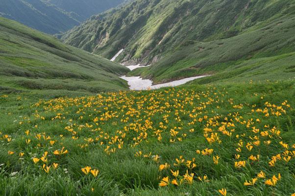 谷間にも花 花 ずっと花