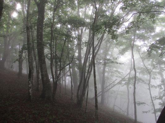 幻想的な霧の樹林
