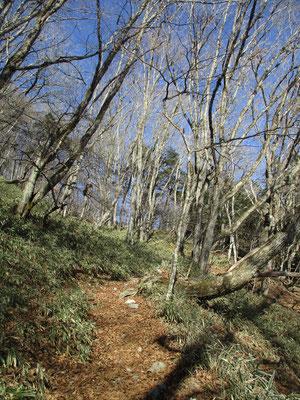 心地よく作られた登山道