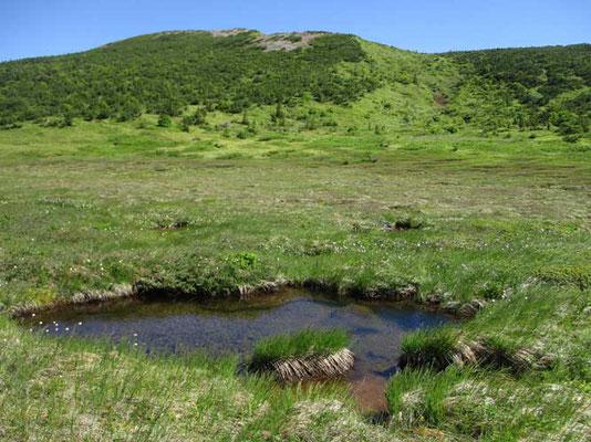 浄土平から一登りすると酸ヶ平(すがだいら)湿原です 池塘もみえます