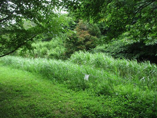 小川の流れている自然公園の縁 その向こうは米軍住宅施設