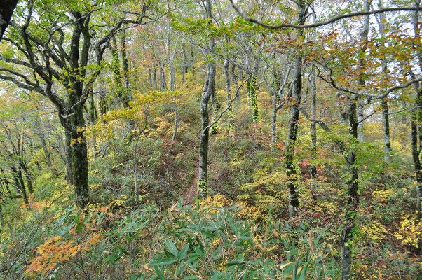 白神岳の秋2