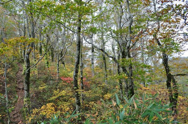 白神岳の秋1