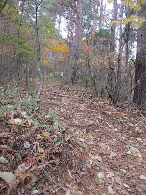 落ち葉の敷き詰められた急登の登山道