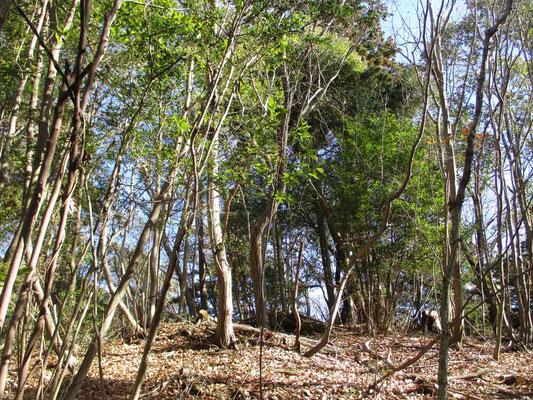 稲荷山の山頂部 立ち木越しに奥には生藤山が大きく見越せた