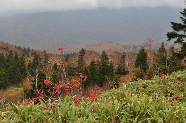 ナナカマドの赤い実と針葉樹の深い緑
