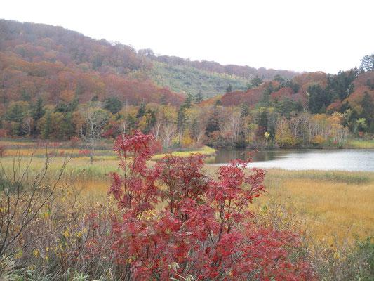 大沼の美しい秋色
