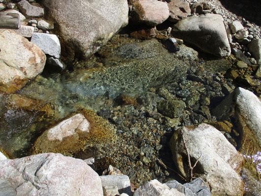 下りの途中 沢水はどこまでも透明できれい