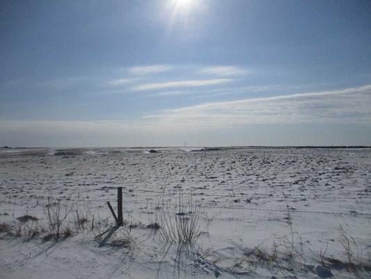 どこまでも拡がる雪原 その遠い向こうに微かに小さく風力発電の風車があるけれど…遠すぎる!