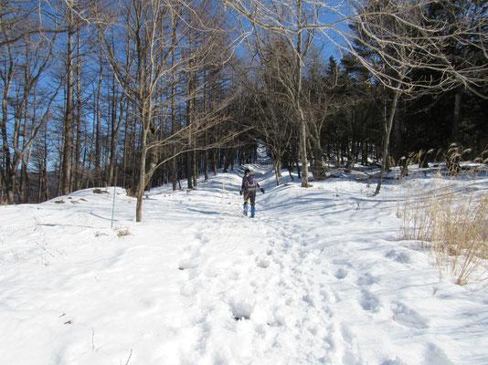 足和田山までは標高差は殆どない分、移動距離が長く感じる 飽きて来たころに最後の登り