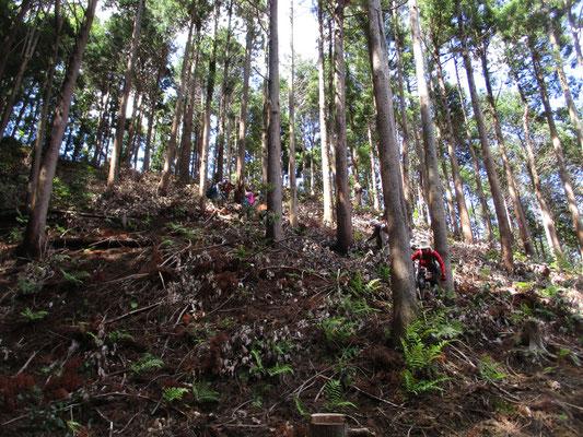 最後の下山は「岩倉ダム左岸林道(仮称)」への急降下