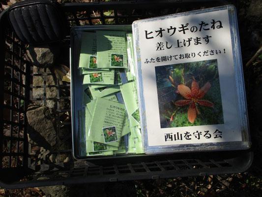 「西山を守る会」のシンボルの花、ヒオウギの種