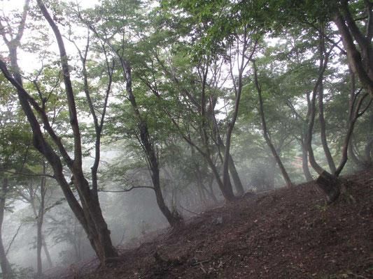 霧が山稜を乗っ越して行く