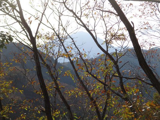 左手(南西)には大室山が梢越しに見えた