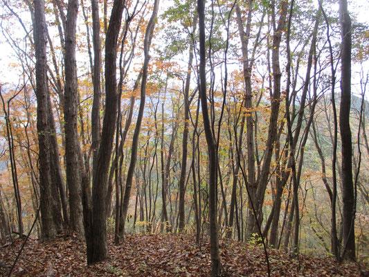 笹尾根の秋1