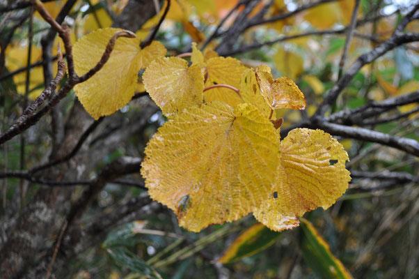 秋色の下山1