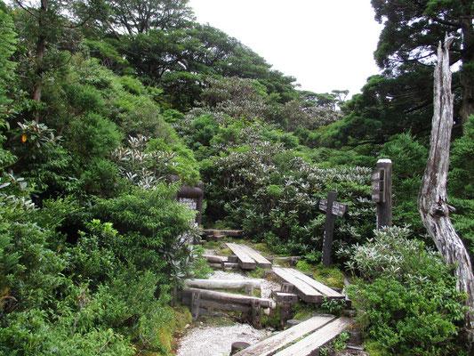 花之江河の分岐 ここから宮之浦岳の登山道と屋久杉ランドへの下山路が分かれる
