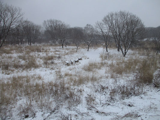 沼の原も一面の雪で絵画的な情景になる