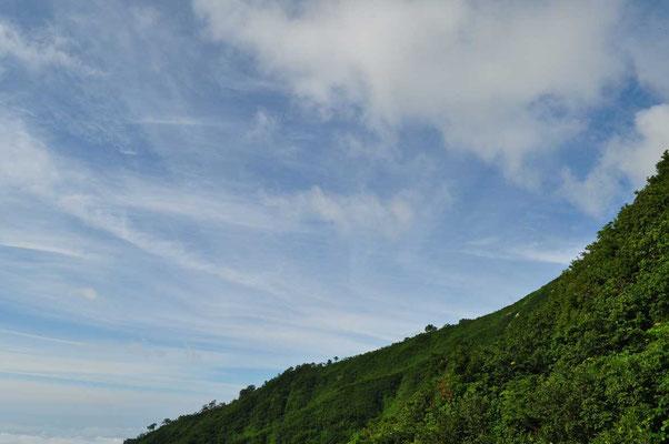 樹林帯に入る前に青い空を見上げる