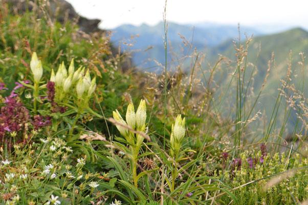 高嶺の花々を前景に〜