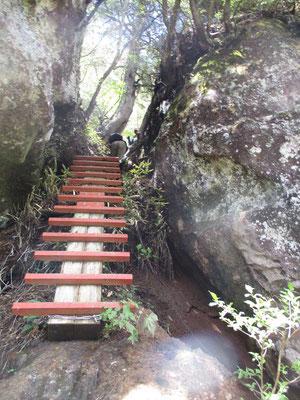 こんな梯子が多く設置されています。朝の登りでは雨が乾ききっておらず、滑りそうでちょっと慎重を要しました。