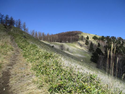 山頂近くは草原のような開けた景観になります