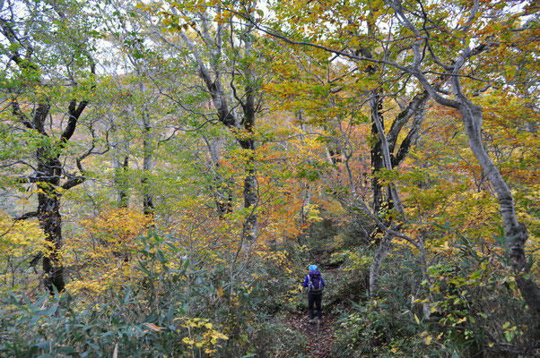 白神岳の秋5