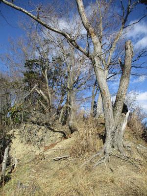 しかしその移動された発句石の展望台も、周りに何もなくなり立ち残った木々も風の影響などで息も絶え絶え 行く度に崩壊が進み現在はこんな状況です 今後もこの崩壊は進み、発句石も再び設置場所を移動せざるを得なくなるのではないでしょうか