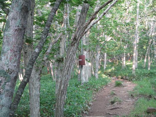 登山口から樹林帯の中には各所に熊よけの鐘があり カーンカーンとかなり響くいい音がします