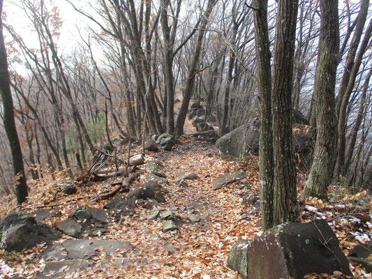 木の落とすものは何故こんなに美しいのか…