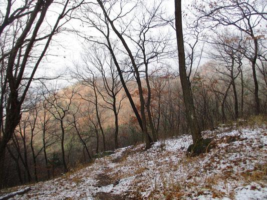 薄く霧が晴れた向こうの山にはまだ紅葉が残っていた
