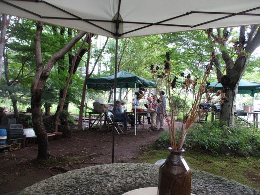 ヒオウギの種(ヌバタマ)を前景にお抹茶を点てるテント