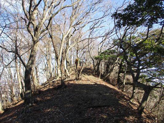 荻野高取山の山頂 丹沢の山は谷が巡り至るところ痩せ尾根が多いですが、特にこの荻野高取山の稜線は両脇が切れ落ちていて要注意です