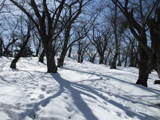 昼を過ぎると青い影が長くのび、雪面に不思議な模様として映ります