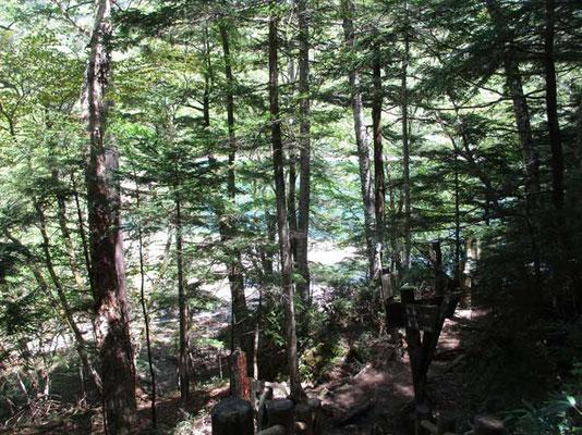 本に載っていた新妻吉永氏の写真とは比べるべくもありませんが、峠から下った最後に目にする針葉樹越しのエメラルドの色合いは心を打ちます