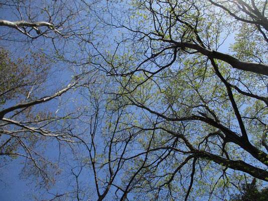 青空に小さな葉が輝いていました