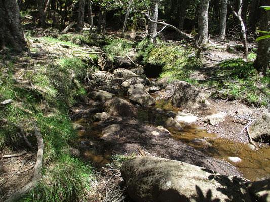 押手川出合 登った途中でさわさわと川が流れているのは新鮮