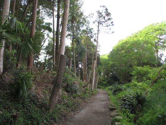 そこを少し進むと、大きな木が伐られている場所に出ます