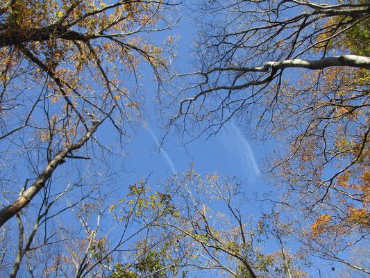 見上げると青い空に刷毛で引いたような雲が平行に流れていく