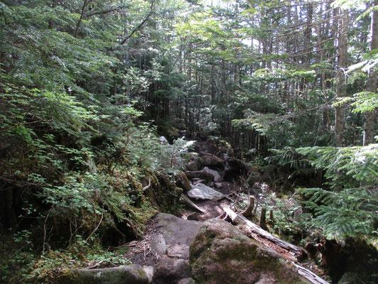 岩ゴロンゴロンの登山道