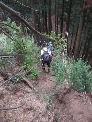 一旦急登を越え足場の悪い経ヶ岳の下りになります