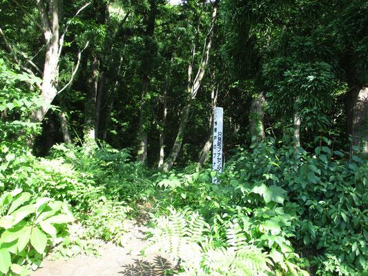 只見町ブナセンターが管理しているブナの森