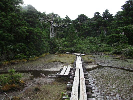 花之江河 天気のせいもあるが、今ひとつの湿原